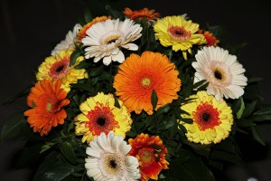 autumn-flowers-1750877_1920