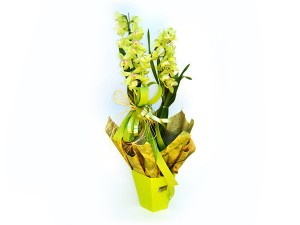 CIMBIDIUM1GD