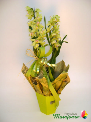 15Cymbidium-no-cachepô-papel-R$-75,00